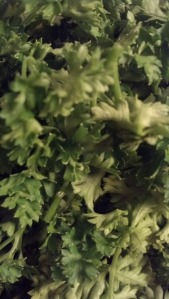 parsley close up